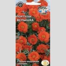 Портулак Вспышка (крупноцветковый, махровый, оранжевый)