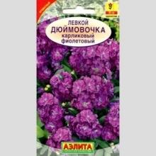 Левкой карликовый Дюймовочка фиолетовый