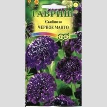 Скабиоза пурпурная Чёрное манто