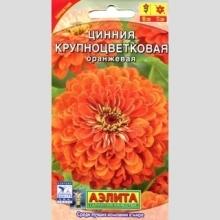 Цинния Крупноцветковая оранжевая