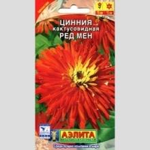 Цинния Ред Мен  кактусовидная